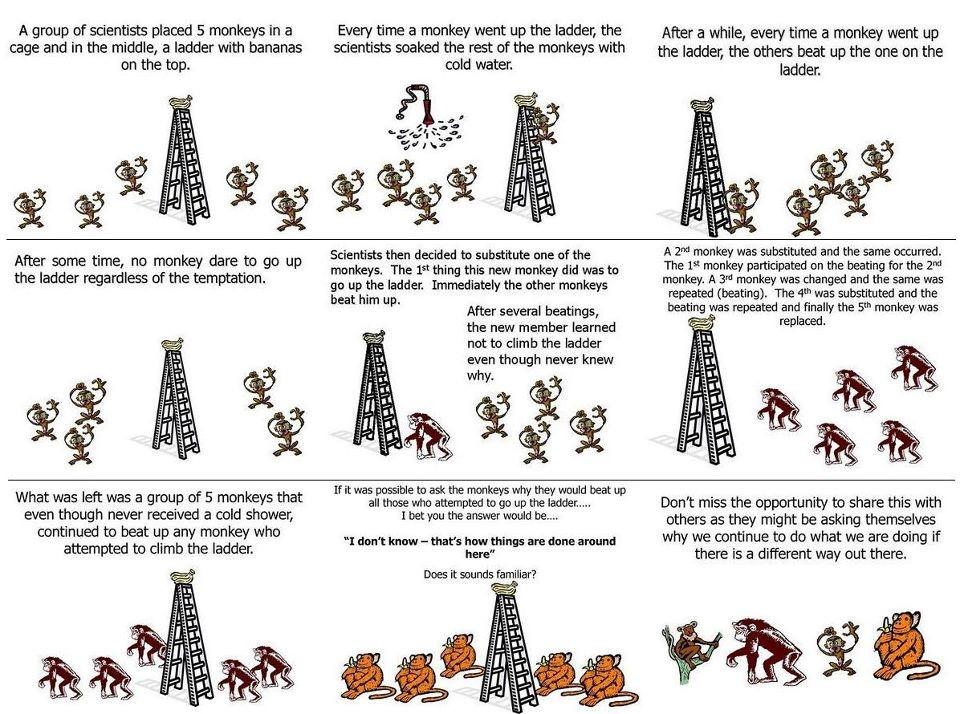 Monkey Experiment